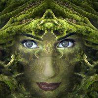 The Alchemy of Menopause Cathy Skipper